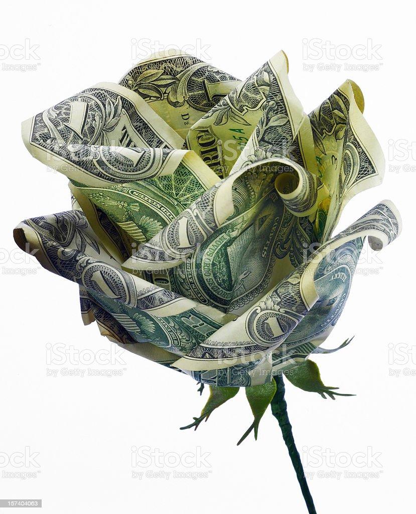 Dollar Rose Close-up stock photo