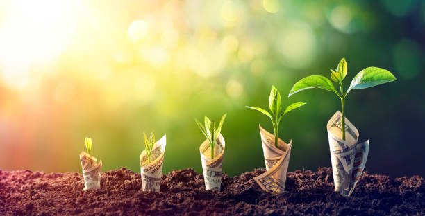 Dollar Seedling - Growth Concept - Plants On Bills In Increase stock photo