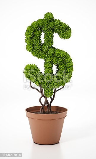 Dollar shaped green plant on the flower pot.
