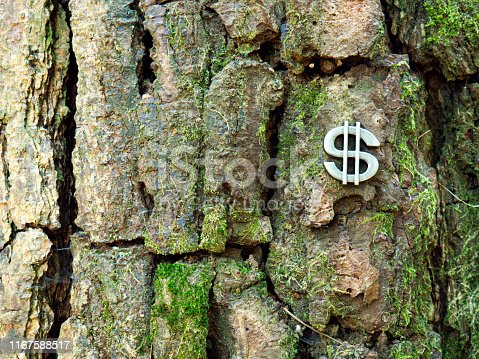 Dollar symbol put on the trunk of tree. - Money and Finance concept.