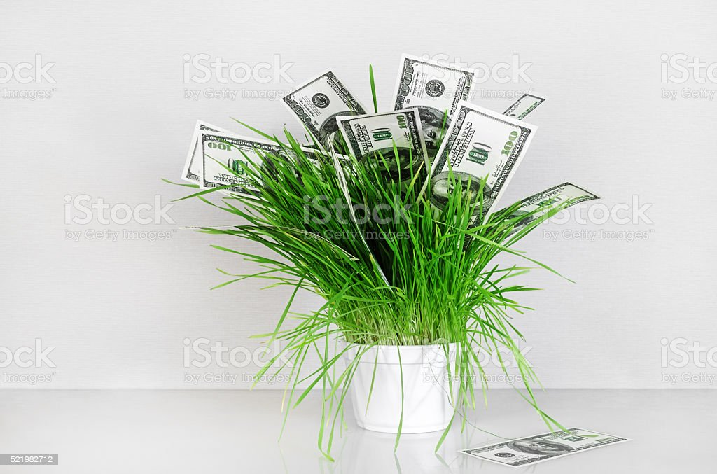 Dollars in grass stock photo