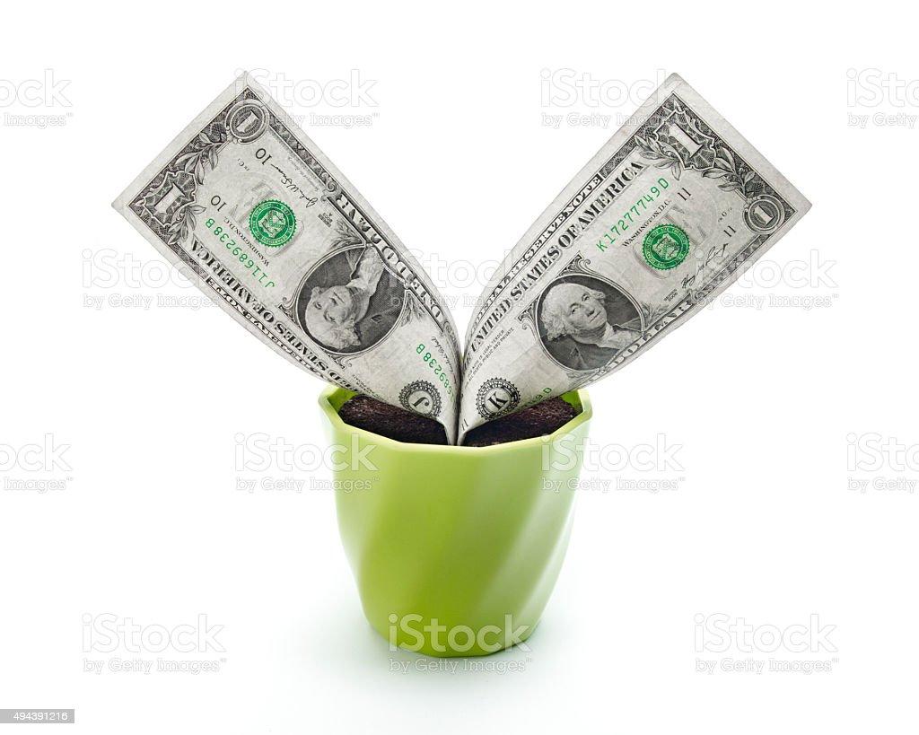 Dollars like Grass stock photo