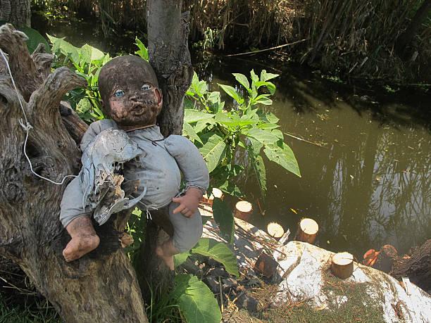 dolls of xochimilco - 公仔 個照片及圖片檔