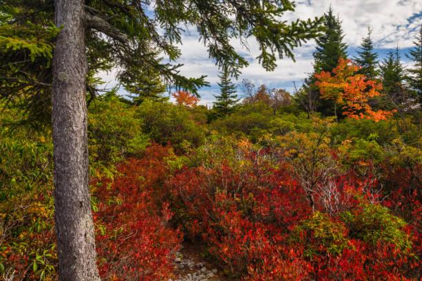 Dolly Sods, Autumn, West Virginia stock photo