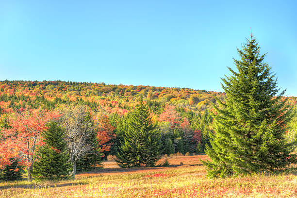 Dolly sods meadow and trail path during autumn Dolly sods meadow and trail path during autumn in West Virginia monongahela river stock pictures, royalty-free photos & images