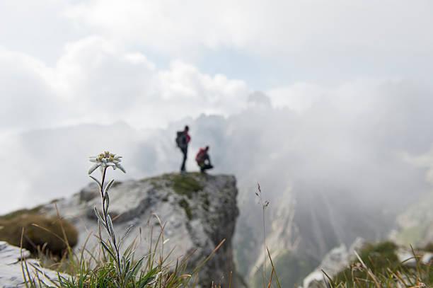 dolomite edelweiss – Foto