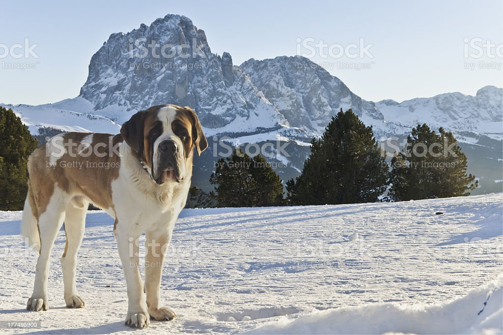 Dolomites Mountains and San Bernardo royalty-free stock photo
