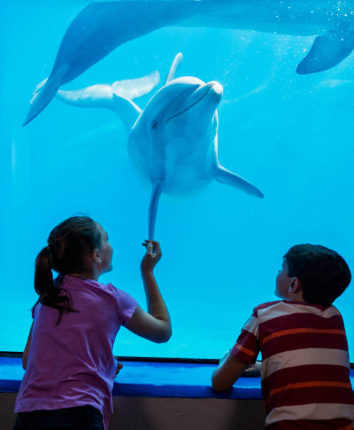 Dolphin and children watching each other stock photo