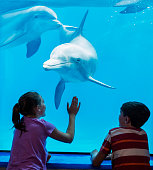 Two children at an aquarium, looking at bottlenose dolphins swimming underwater. One of the dolphins is looking at the spectators through the glass window of his enclosure.