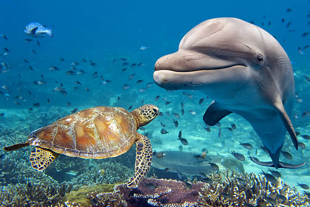 dolphin and turtle underwater on reef dolphin and turtle underwater on reef background looking at you dolphin stock pictures, royalty-free photos & images