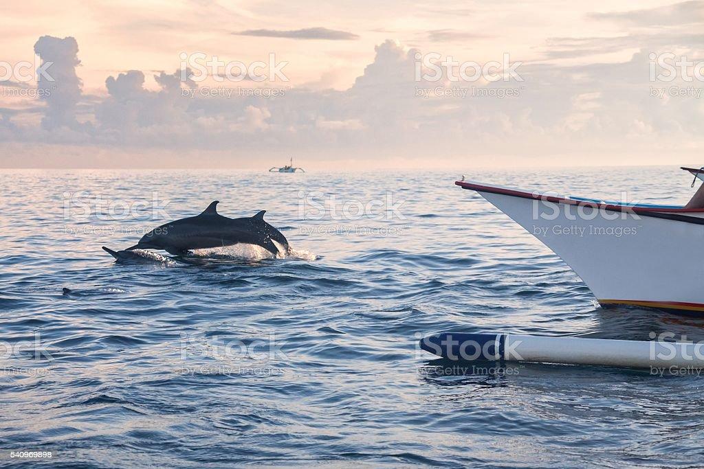 Dolphin Beach Lovina Bali, Dolphin Jumping stock photo
