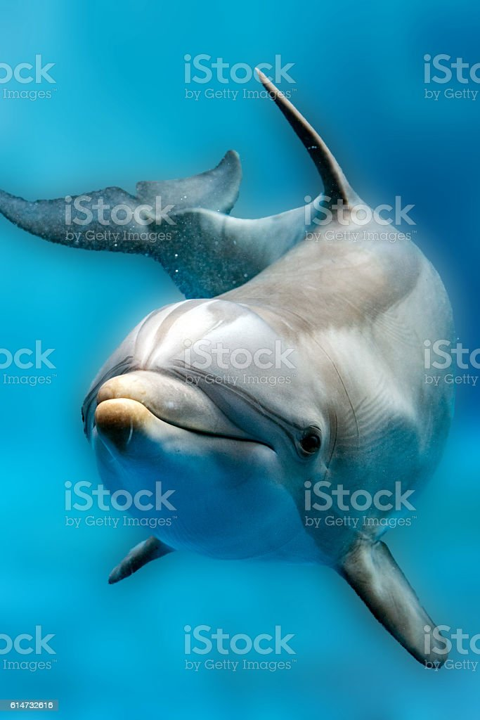 dolphin close up portrait detail while looking at you stock photo