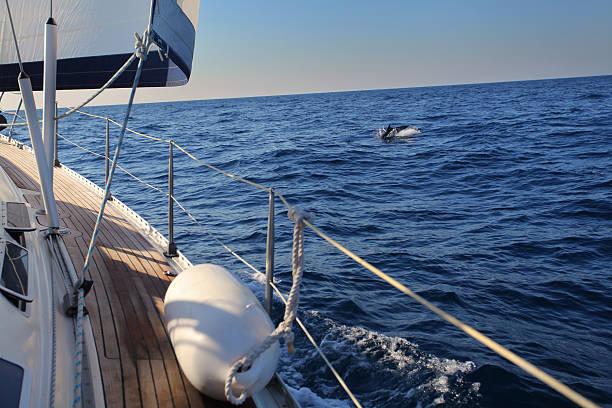 Dolphin się do nas – zdjęcie