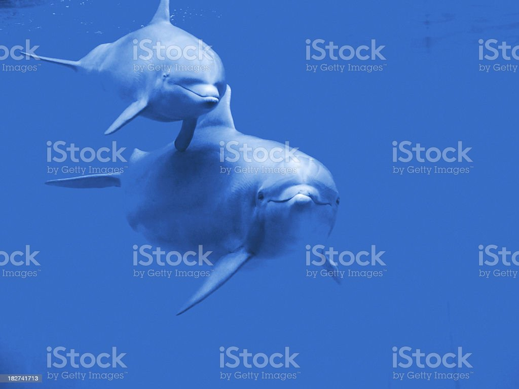 Dolphin Family stock photo
