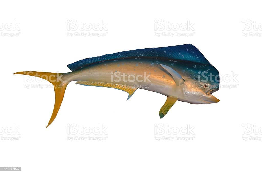 Dolphin Fish stock photo