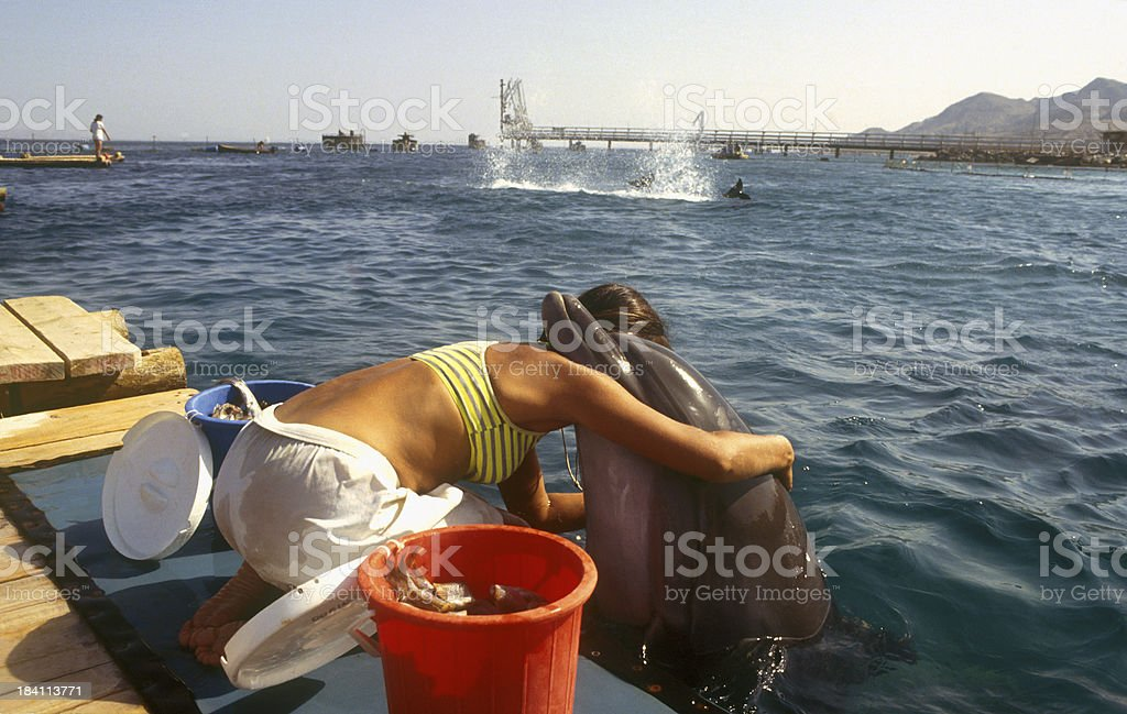 dolphin hug stock photo