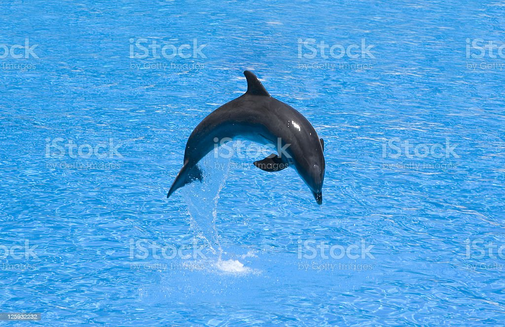 Dolphin in a jump royalty-free stock photo