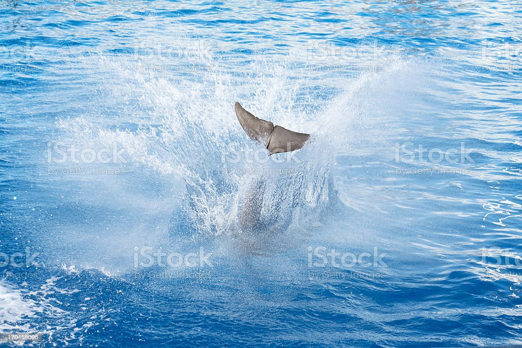Dolphin Jump stock photo