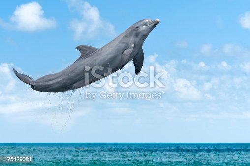 Dolphin jumping in the ocean.  Please see my portfolio for other animal images.