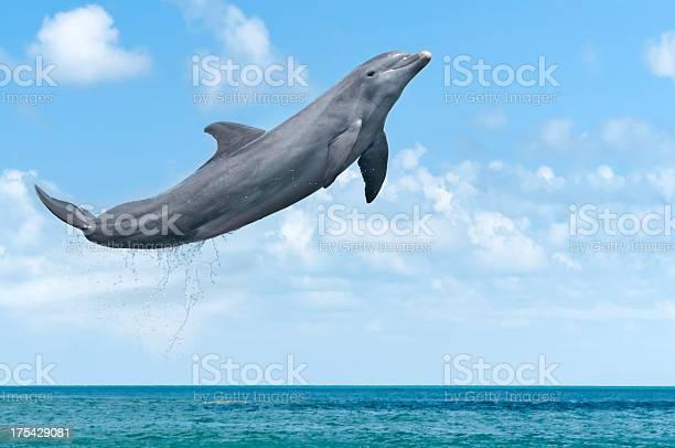 Dolphin jumping picture id175429081?b=1&k=6&m=175429081&s=612x612&h=l7mer9x gifxzmyd76vsbenpzth3nyolsepznfvydc0=