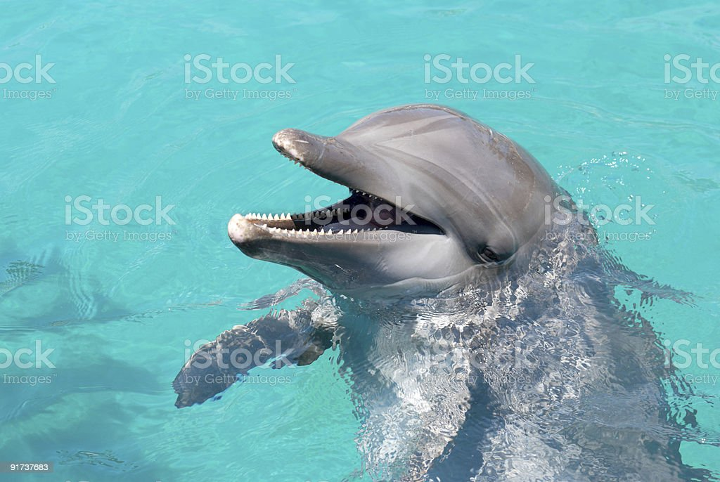 Dolphin laughing at the crowd royalty-free stock photo