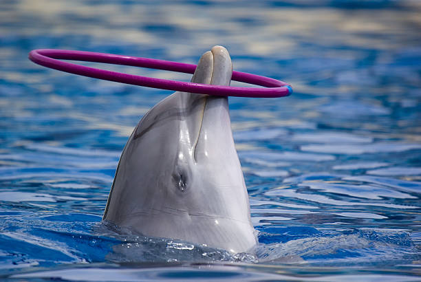dolphin - animals in captivity stock pictures, royalty-free photos & images