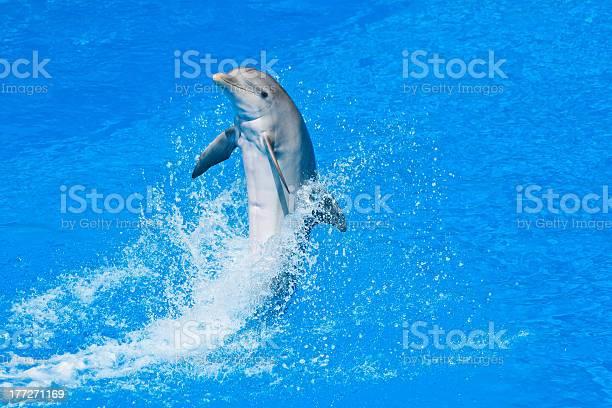 Dolphin picture id177271169?b=1&k=6&m=177271169&s=612x612&h=qs9ckdn xwknyvxaogwfqlji4ptq1aneawai8txyrc8=