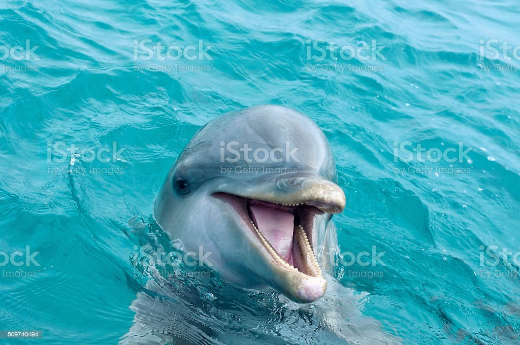 Dolphin stock photo