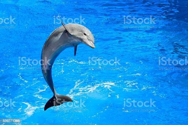 Dolphin picture id539271385?b=1&k=6&m=539271385&s=612x612&h=xntjvddzxxwryqolq5nfi7lb6pxtzcef3o eol7mr6q=