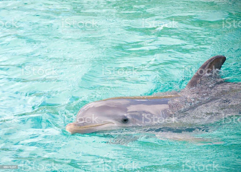 돌핀 (Dolphin royalty-free 스톡 사진