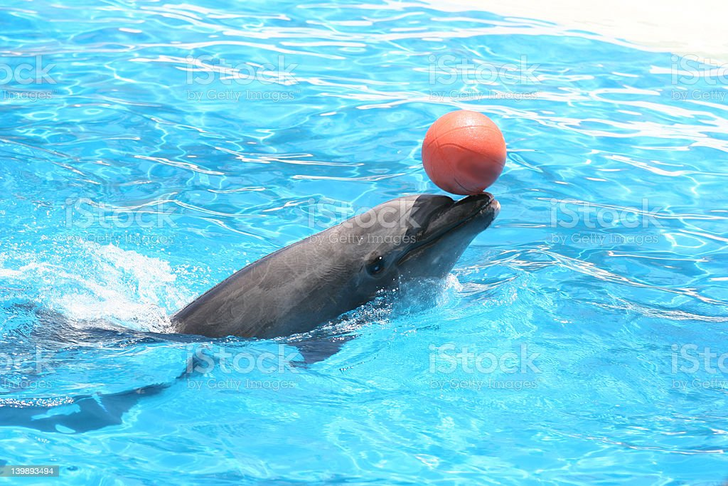 dolphin playing stock photo