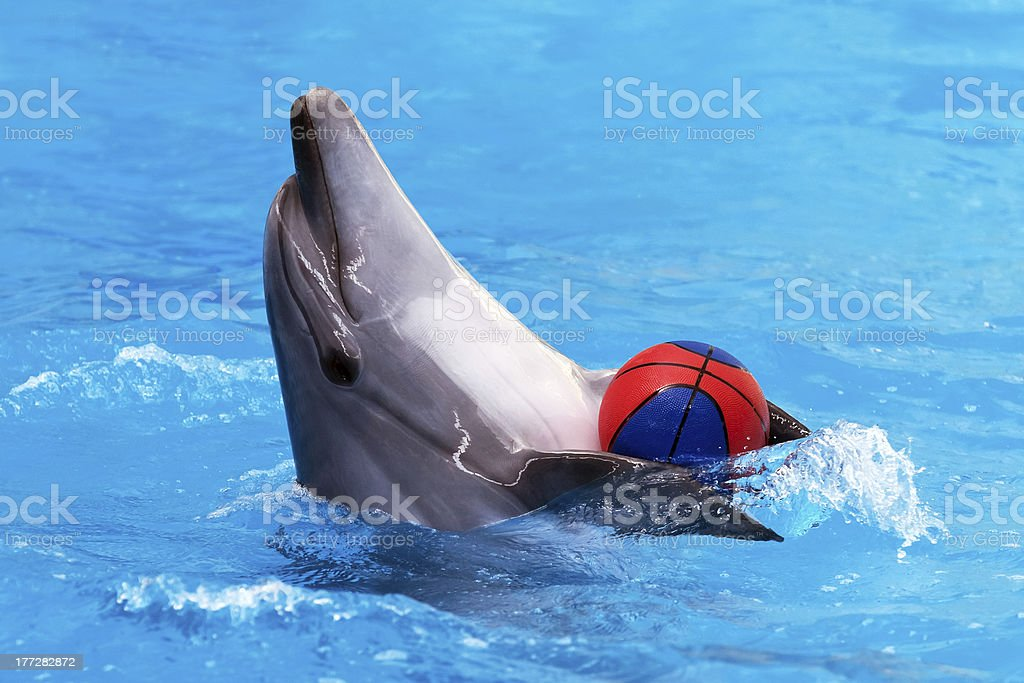 Dolphin playing with ball in blue water royalty-free stock photo