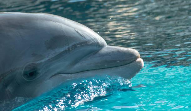 Dolphin portrait stock photo