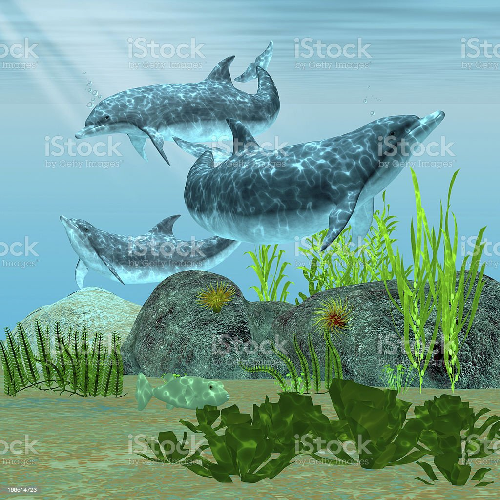 Dolphin Reef royalty-free stock photo