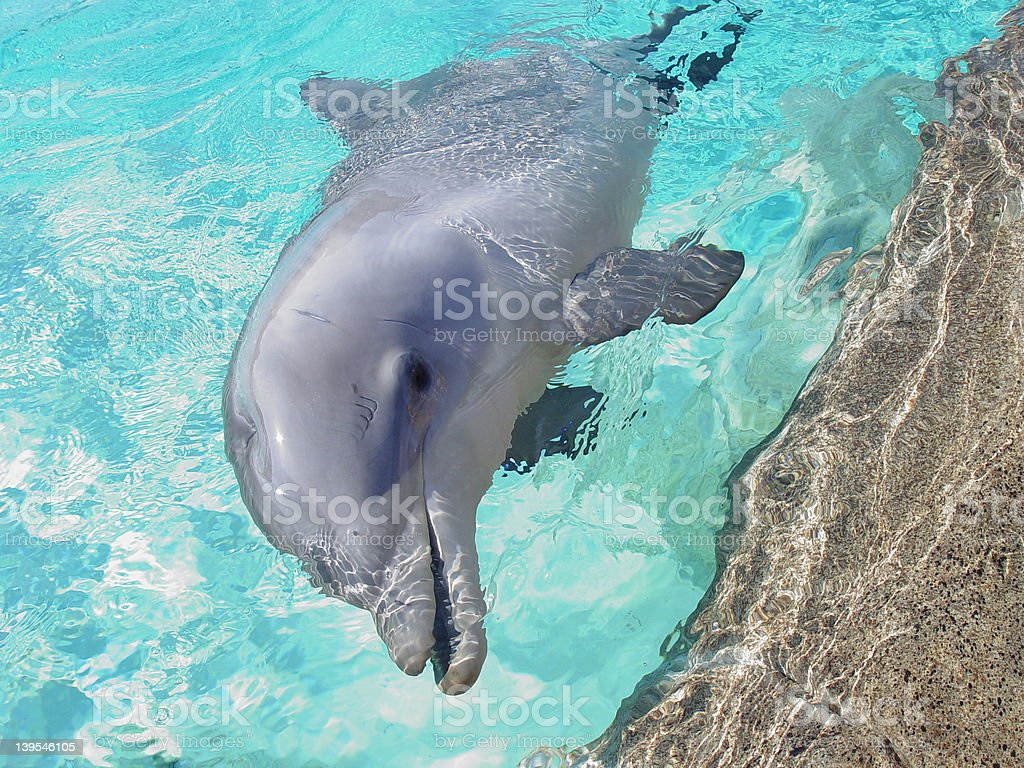 Dolphin Saying Hello stock photo