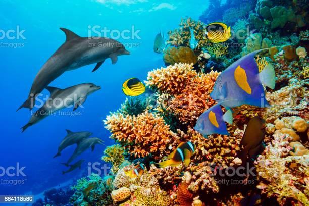 Dolphin sea life school of dolphines coral reef underwater scuba of picture id864118580?b=1&k=6&m=864118580&s=612x612&h=1mi9ggaop9qsptzkknarwgeu7ryuy1amawy2ohg4dym=