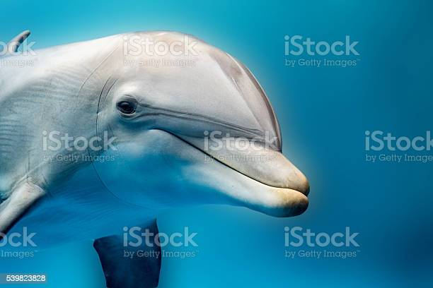 Dolphin smiling eye close up portrait detail picture id539823828?b=1&k=6&m=539823828&s=612x612&h=yvhybdazug8v1 t0dhxtsjlb05yhotwhpmfgbqdw8qy=