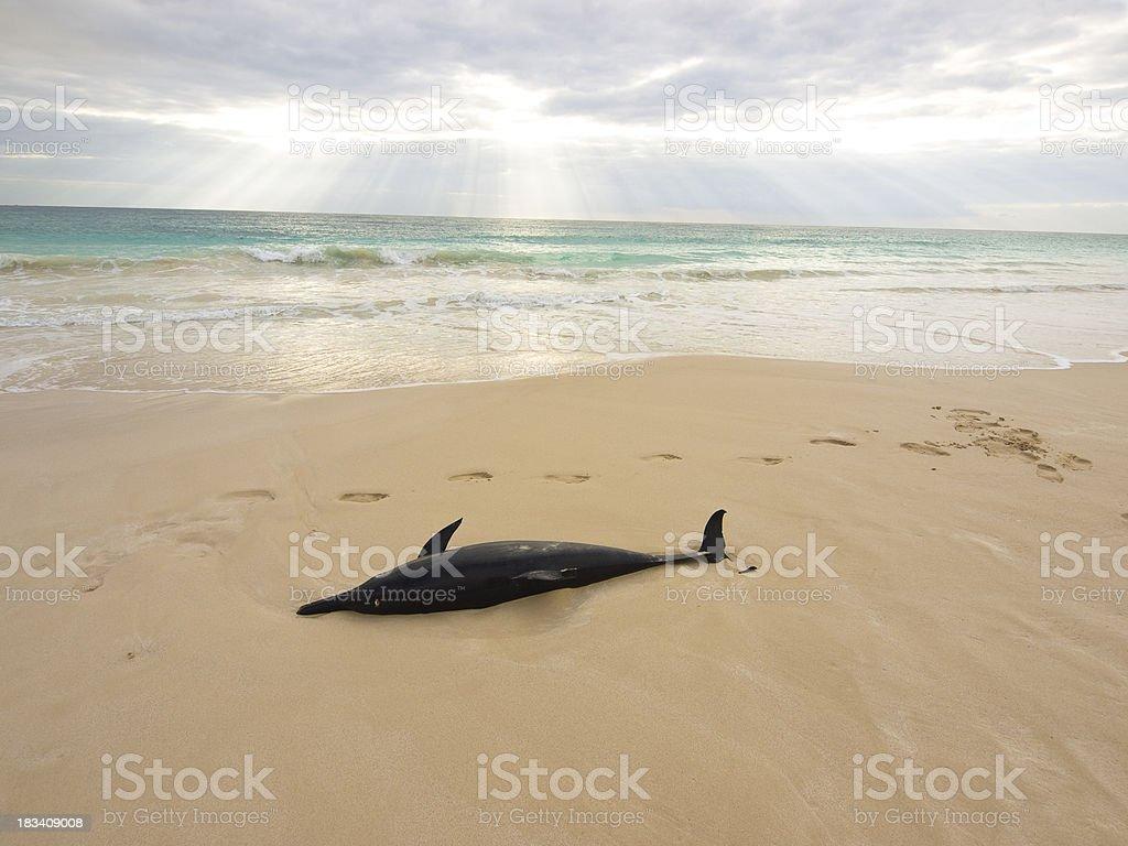 dolphin soul royalty-free stock photo