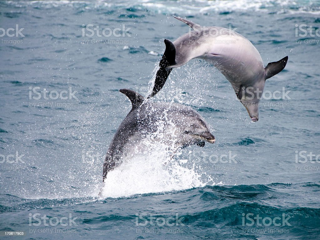 Dolphin Splash stock photo