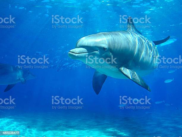 Dolphin swimming in water picture id485006472?b=1&k=6&m=485006472&s=612x612&h=larv1liront8uqo5 9saes824buwusr41z316depq1o=