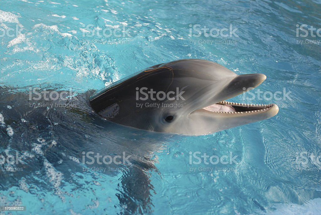 Dolphin swimming stock photo