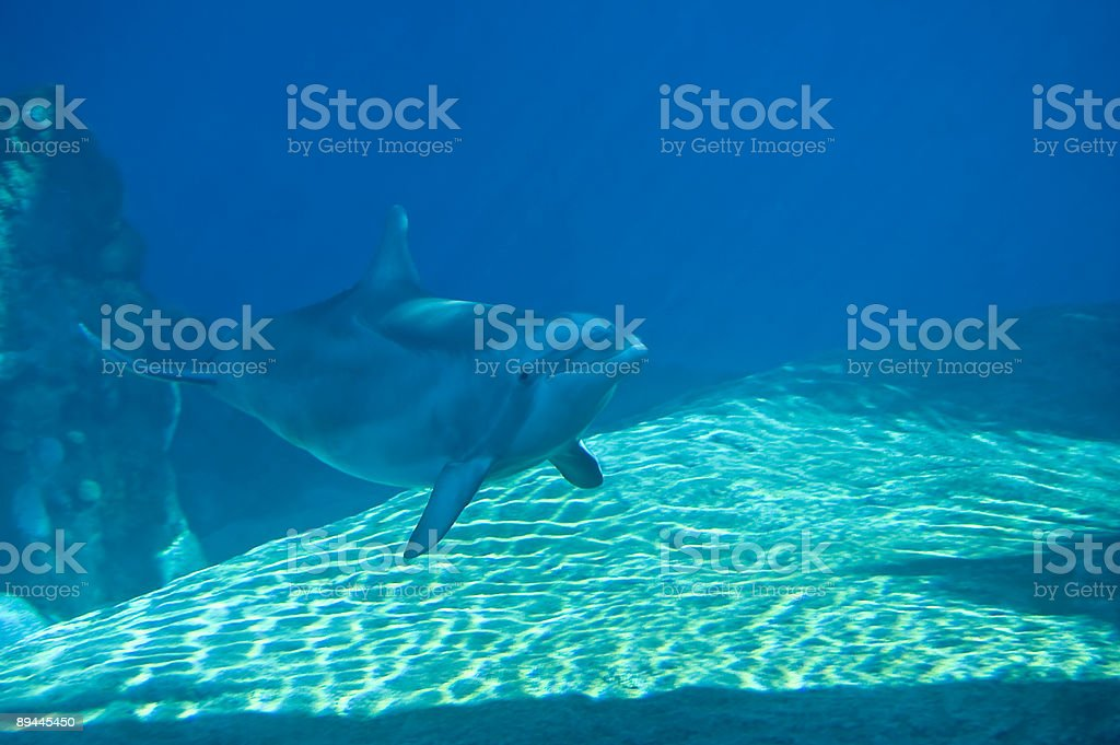 Dolphin Swimming royalty-free stock photo