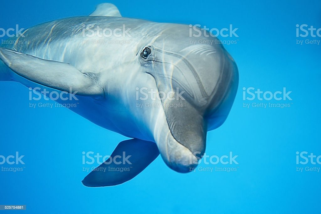 Dolphin under water stock photo