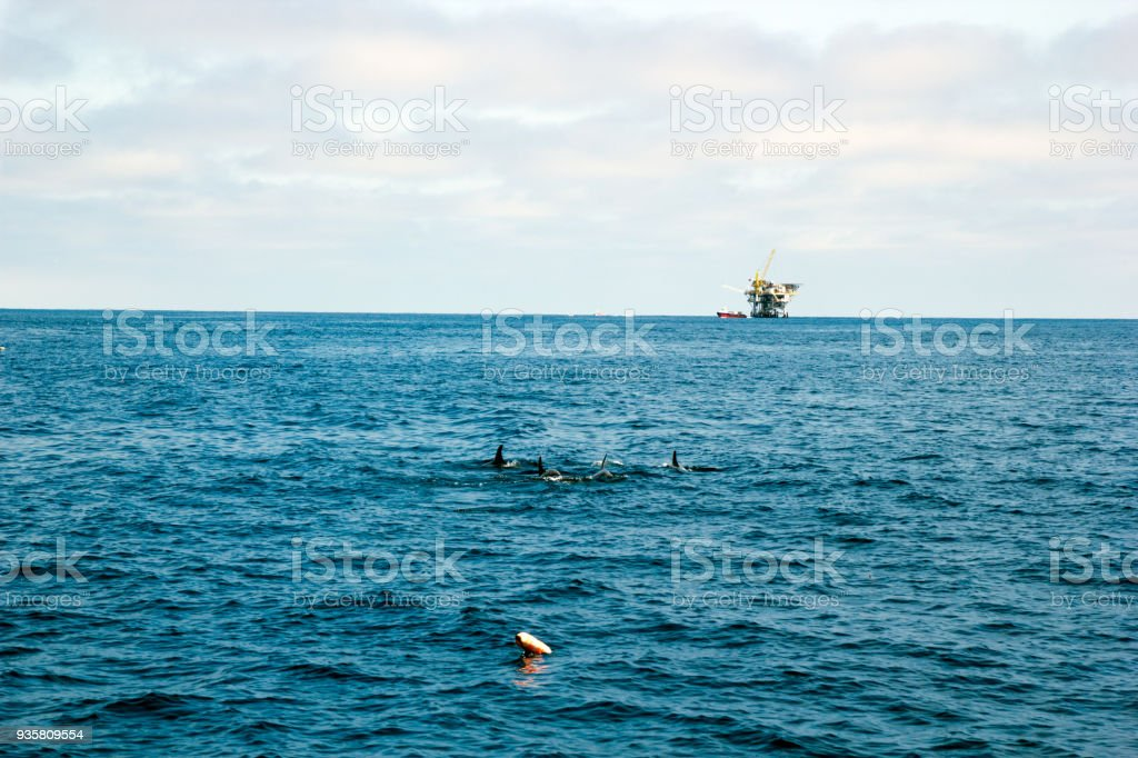 Dolphins and Oil Rig stock photo