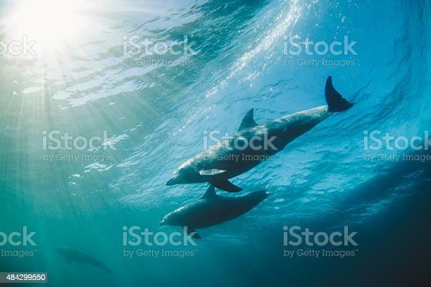 Dolphins catching a wave picture id484299550?b=1&k=6&m=484299550&s=612x612&h=brkf eln3s0s7kljrxviu6b6cr 0shxtqdmu6le4o0c=