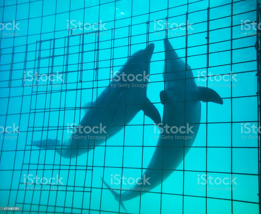 Dolphins in captivity stock photo