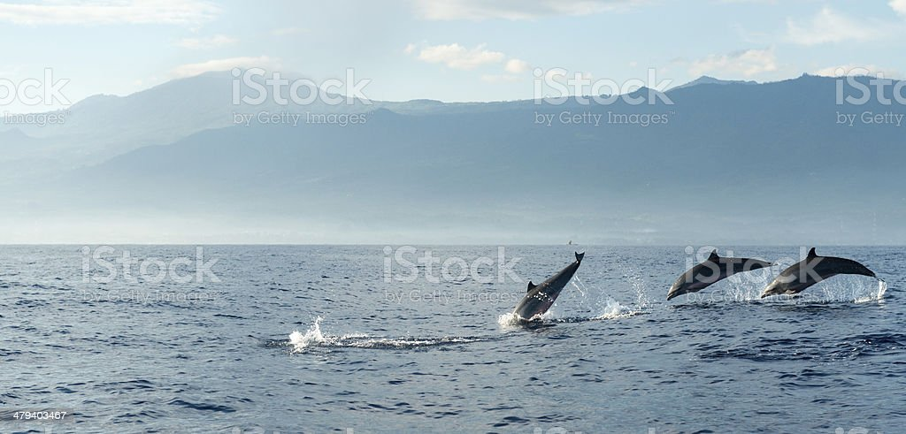 Dolphins in Pacific Ocean stock photo