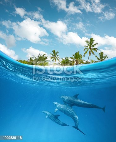 Dolphin family swimming near the surface of the ocean. Underwater view.