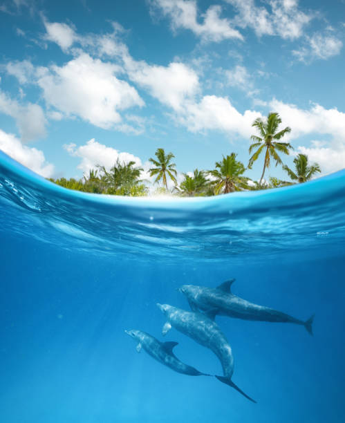 dolphins in the ocean - borchee stock pictures, royalty-free photos & images