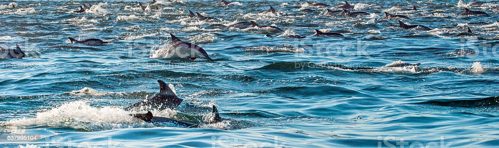 Dolphins in the ocean stock photo